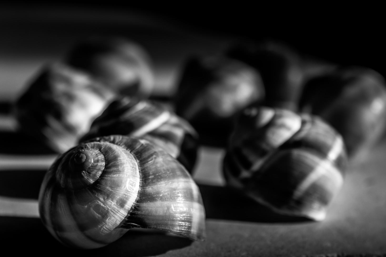 Shells_9949.jpg