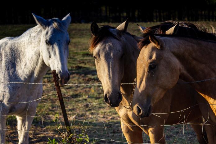 Three Horses_5369.jpg