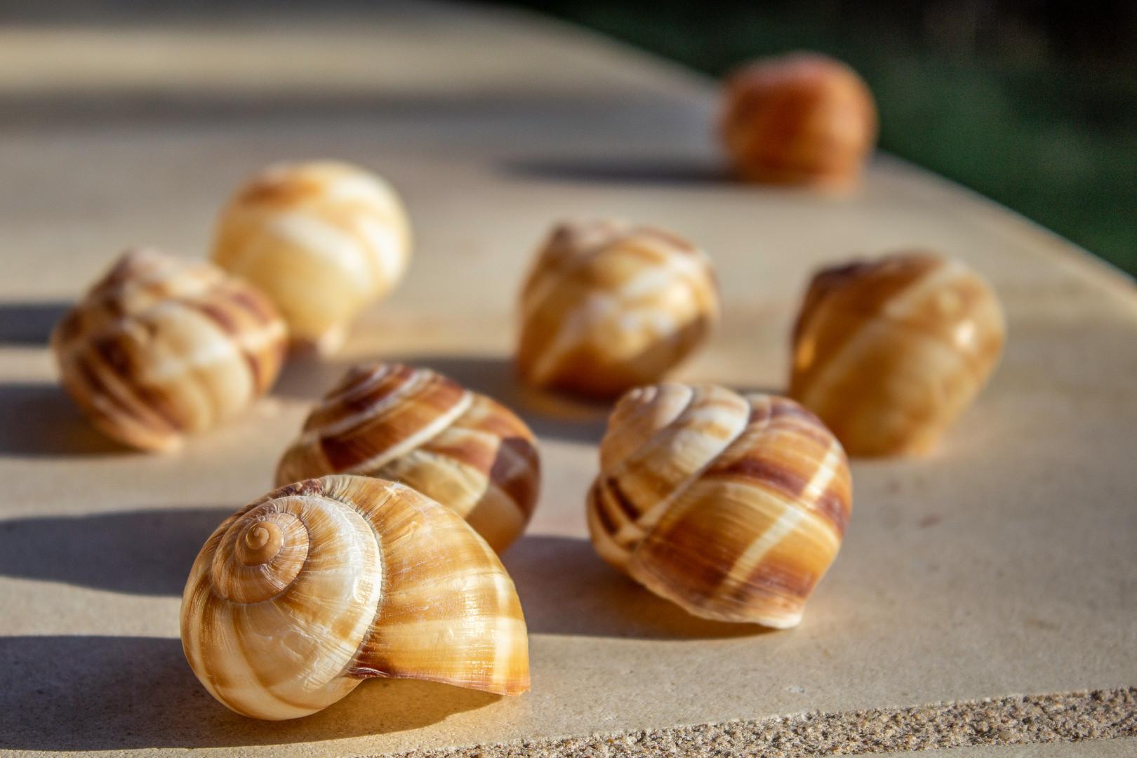 Shells_9948.jpg