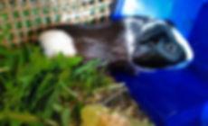 guinea_edited.jpg