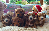 Lynne and Wizzys pups.jpg