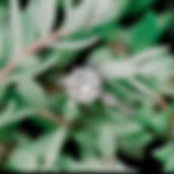 Screen Shot 2020-01-29 at 11.30.15 AM.pn