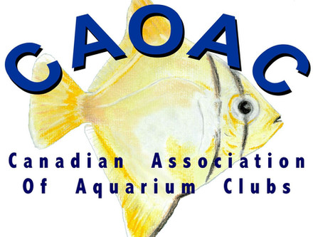 CAOAC MEETING MINUTES OCTOBER, 6, 2020
