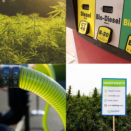 A Sustainable Alternative to Fossil Fuels: Hemp & Biofuel