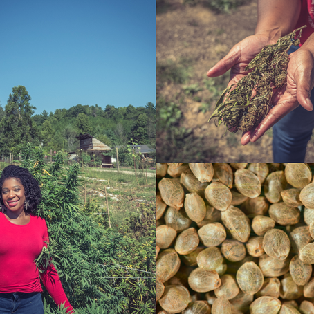 Black and Green: Hemp Farming in the Black Community