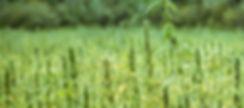 Farmer Franny Hemp Shoot-26.jpg