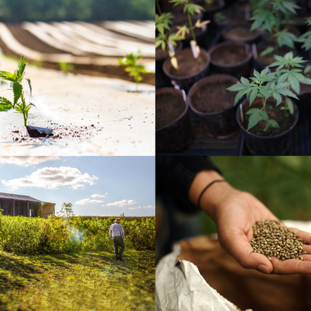 Hemp Has Been Legalized…Now What?
