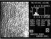 Microscopia especular León