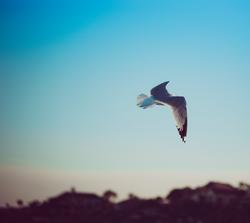 beachseagull