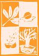 logo Okkernoot kwaliteit hoog.png