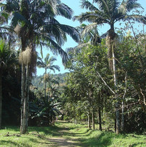 Caminho dentro da Fazenda