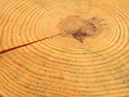 Tree_Rings-d4f6f54ce5b041c18e93d99b99934