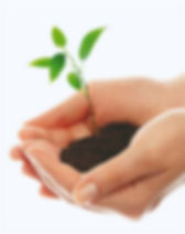 plant%20hand3_edited.jpg