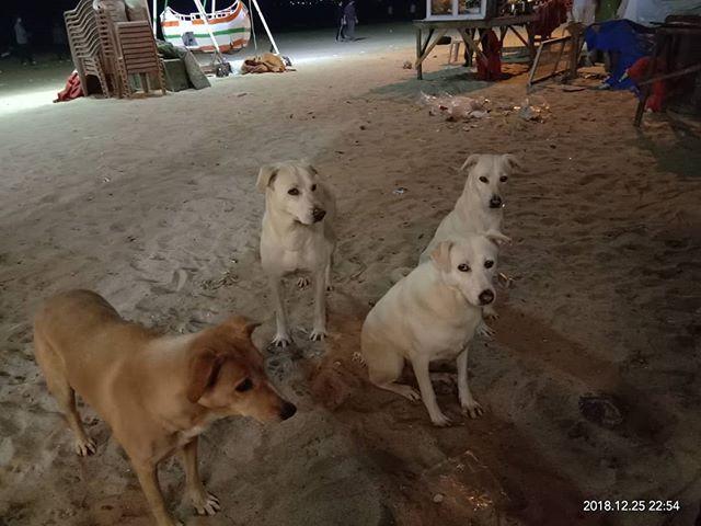 Feeding stray dogs