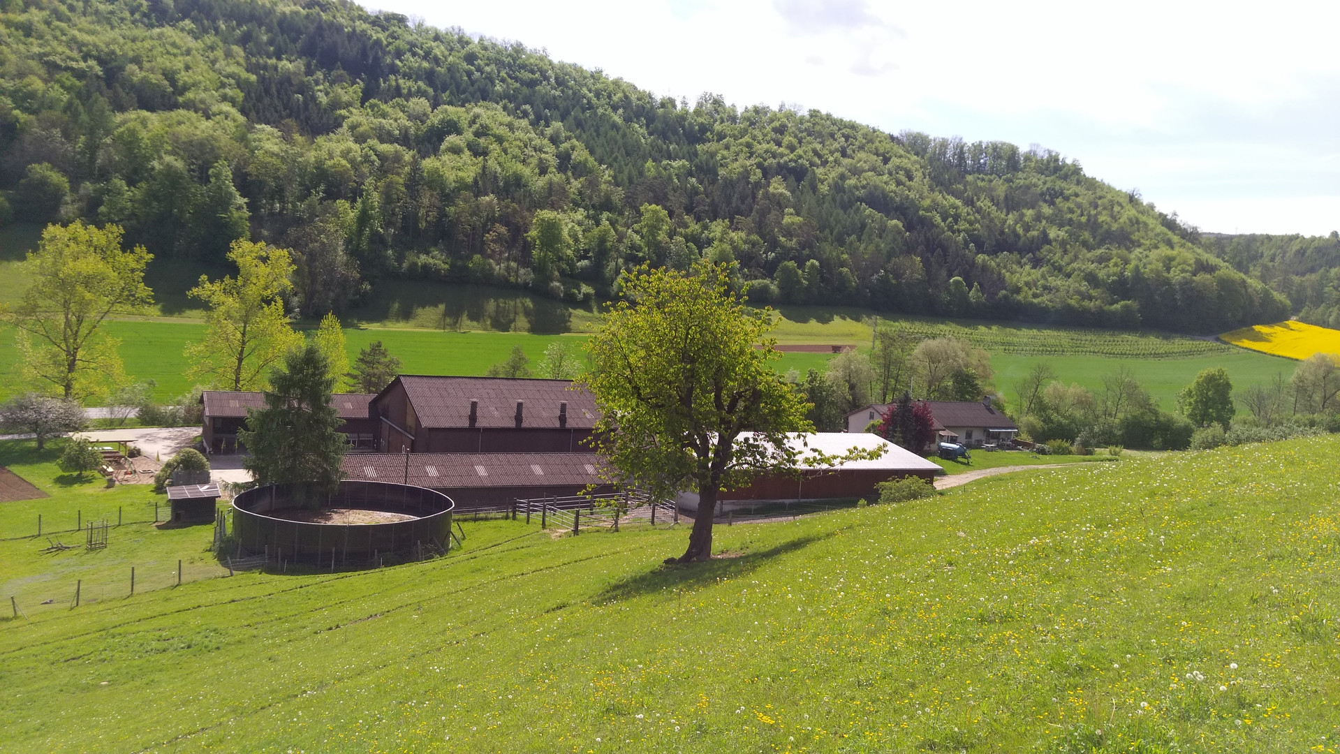 Erlenhof 2