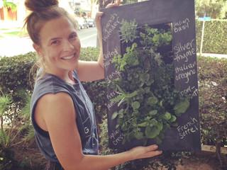 Planting an Indoor Herb Garden