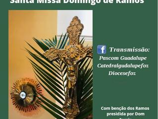 Recomendações para celebrar o Domingo de Ramos em casa