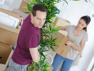 Top 4 Tips for Moving Plants to Your New Home