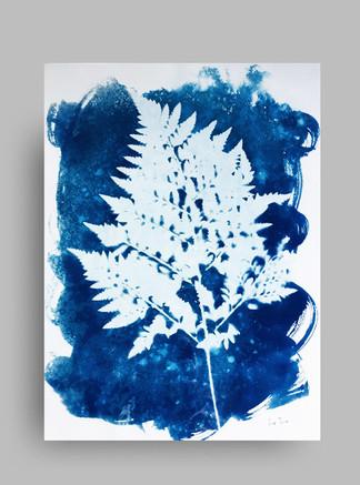 Ciantotipia. Cyanotype. Hojas. Leaves