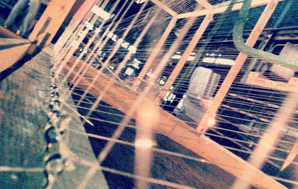 Dancing Harps Photo
