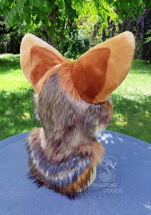 coyote4.jpg