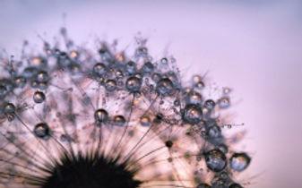 lowenzahn-blute-wildblume-natur-15751352