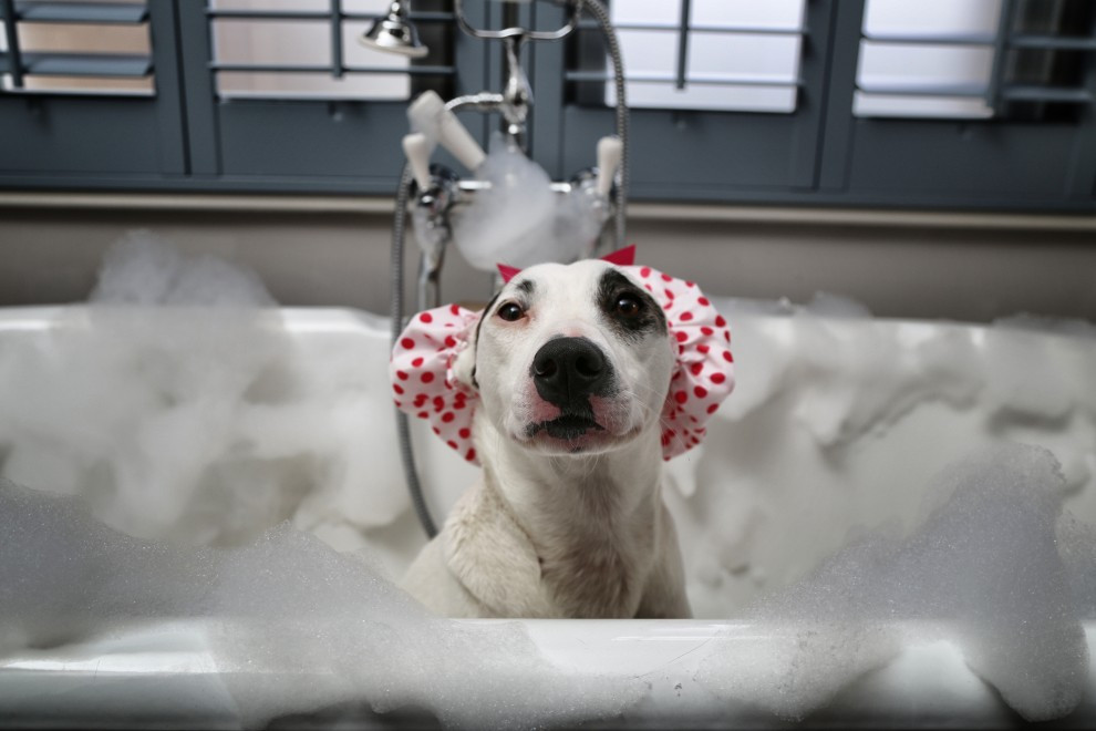 23.-Shadow-in-the-Bath-in-a-Shower-Cap1-