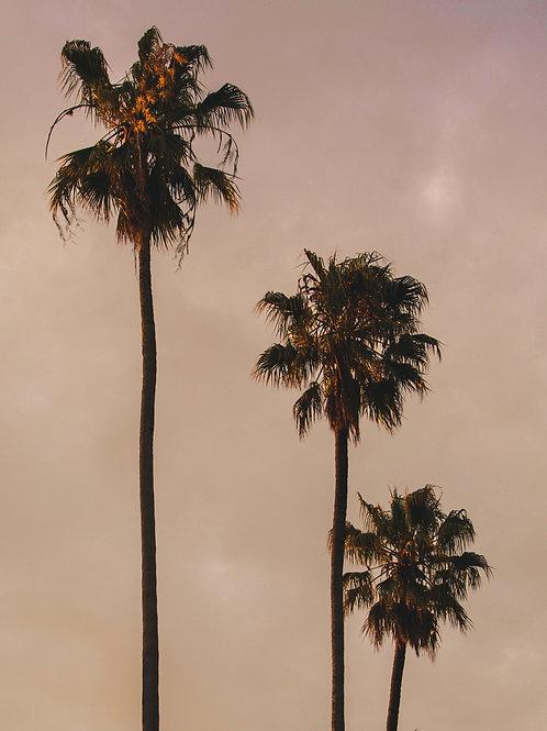 The Three Little Palms