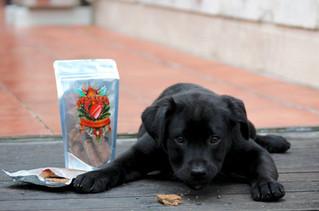 Mashbone Dog Treats - Brand Photos