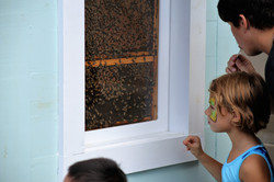 Bee_House_Great_Insect_Fair_06