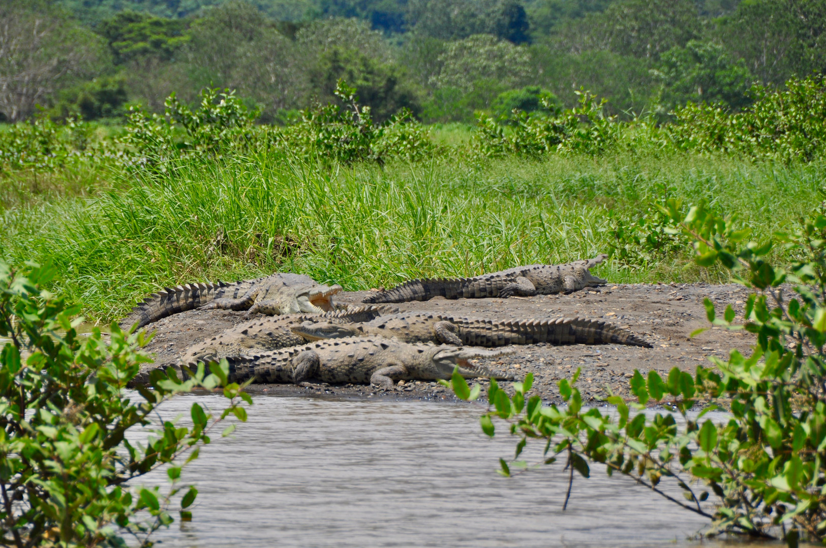 Tarcoles  Crocodiles Tour