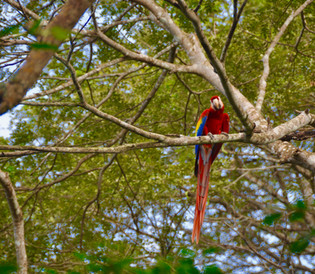 Parc National Carara Tarcoles