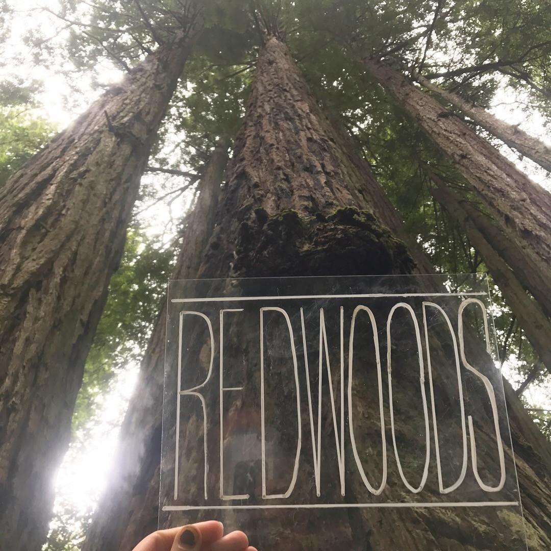 Redwood National Forest