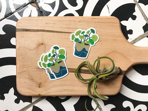 Pilea Peperomioides Plant Sticker