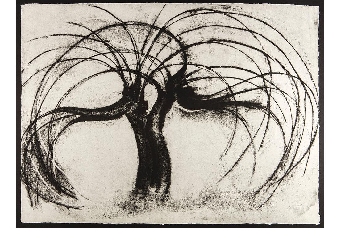 Árbol de luz y sombra