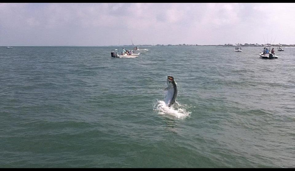 Large Boca Grande Tarpon