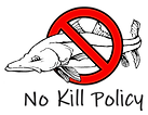 Final - No Kill Snook Policy - Large.png