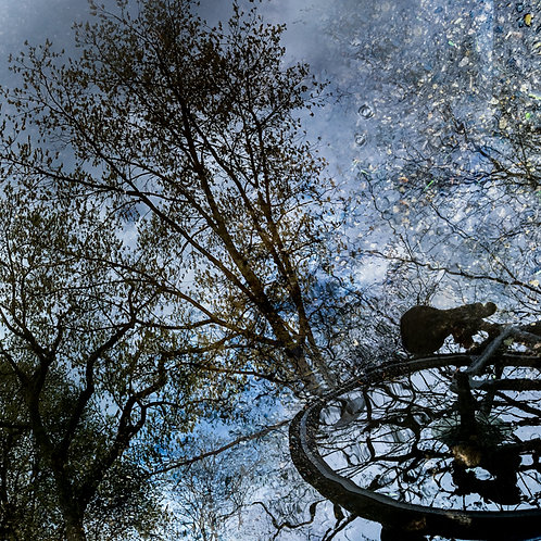 Bicycle Trees Reflection