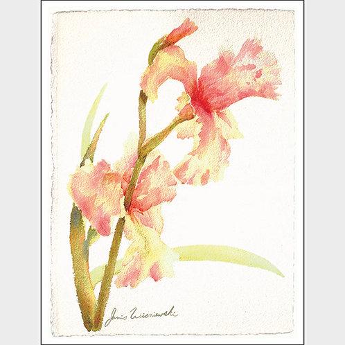 """Blushing Irises"" 10 Note Cards"
