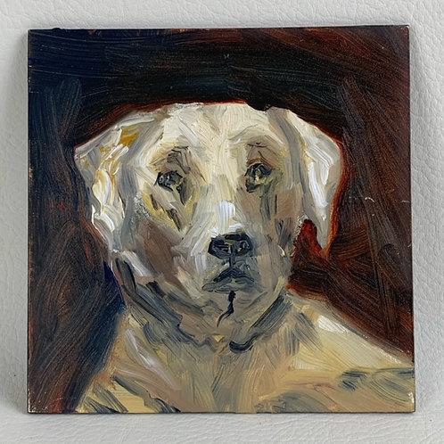 """Loyal Labrador"""