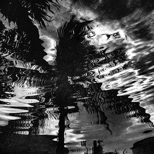Liquid Palm Reflection