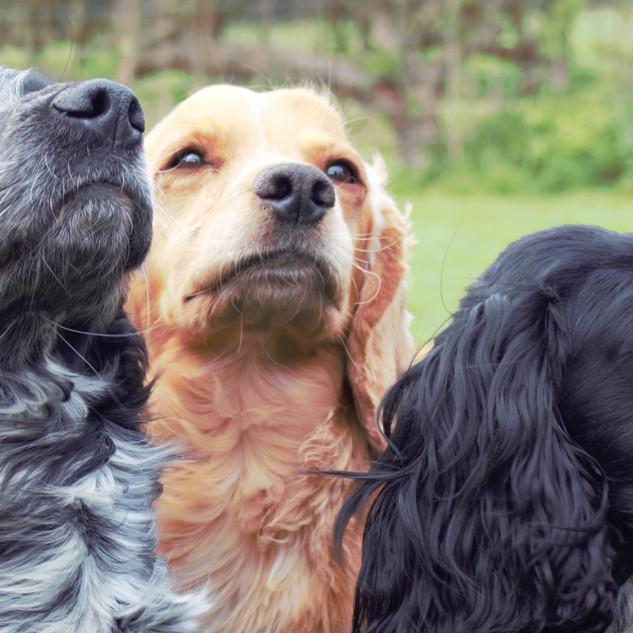 Dog Banner 2.jpg