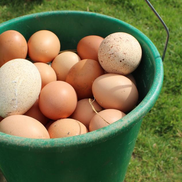 Eggs Tweet.jpg