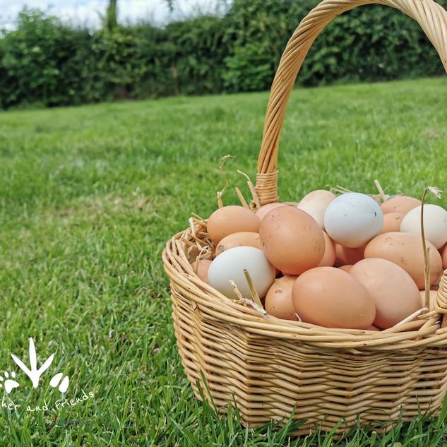Eggs In Basket logo.jpg