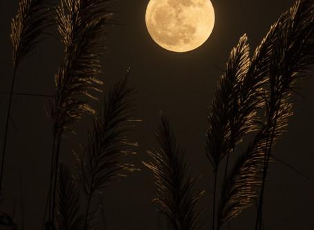 Moonbeams via Danielle Sullivan