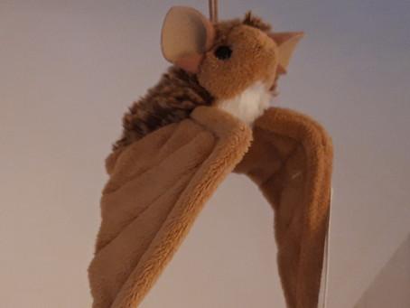Binfield's bats