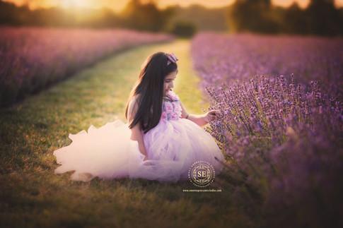 Lavender-Session.jpg