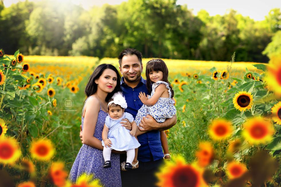 Toronto-Sunflower-Family-Photo-Sessions.