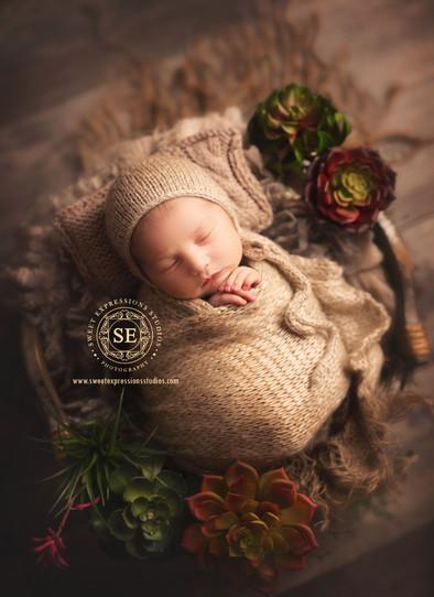 Toronto-Newborn-Photography-Succulent.jp
