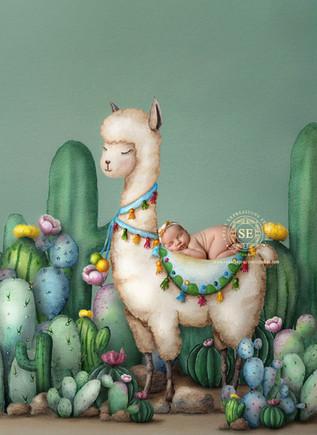 Toronto-Newborn-Photography-Llama.jpg